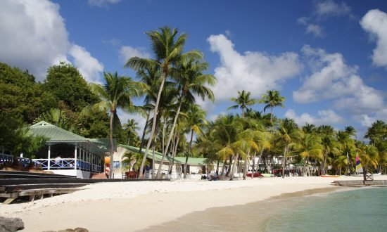 trees and stores on the beach