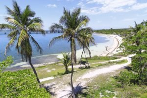 long white beach surrounded by trees