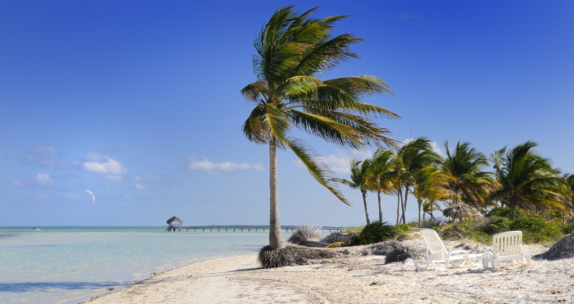 trees blowing in the wind on the beach in cuba
