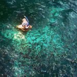 pulau payar snorkeling with colorful fish