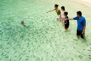 pulau payar people watching shark and fish